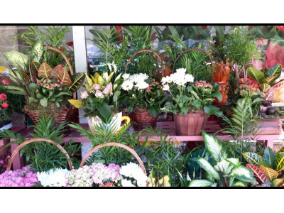 Florist in Fuenlabrada with free home delivery
